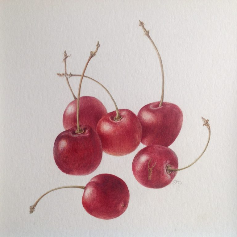 Cherries: watercolour Image size 145mm x 145mm